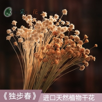 Single Step spring and small Daisy real flowers dried flowers bouquet