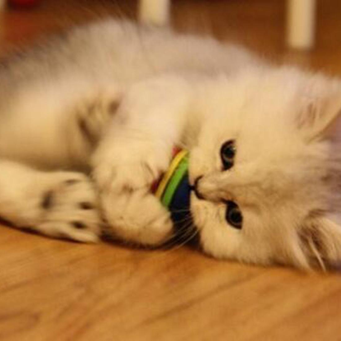 Detail Gambar Lucu Baru 10 Pcs Super Mainan Pelangi Bola Anjing Kecil Kucing EVA Hewan Peliharaan