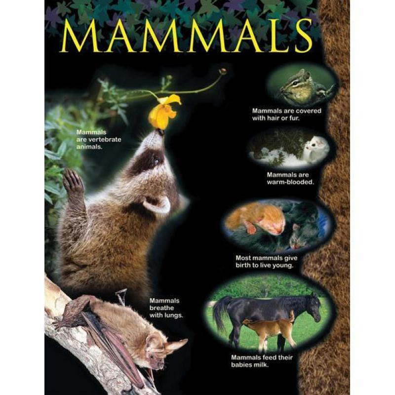 CTP1163 Mammals Animal Classification Chart