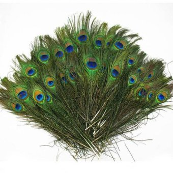 Harga 20pcs lots Real Natural Peacock Tail Eyes Feathers 8-12 Inches /about 23-30cm