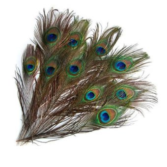 Harga DIY 10 Peacock Eye Tail Feather For Masquerade Decoration Party New