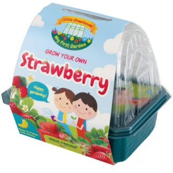 Harga Paris Garden Kids Greenhouse: Strawberry