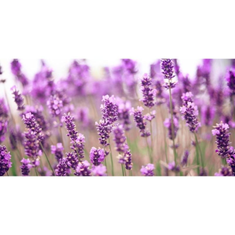 Buy DoTERRA USA Lavender Essential Oil x 15ml Singapore