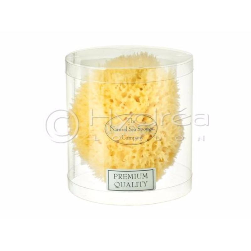 Buy Hydrea London Honeycomb Sea Sponge Mediterranean Origin - Premium Quality, Size 4, 5 - 5.5 Singapore