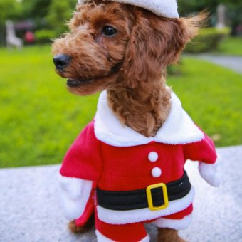 Harga Santa Claus dog clothes - intl