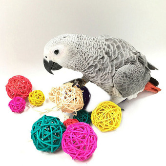 Harga Rattan Colorful Pet Bird Claw Paw Chew Toys Parrot Ball Cage Budgie Cage - intl