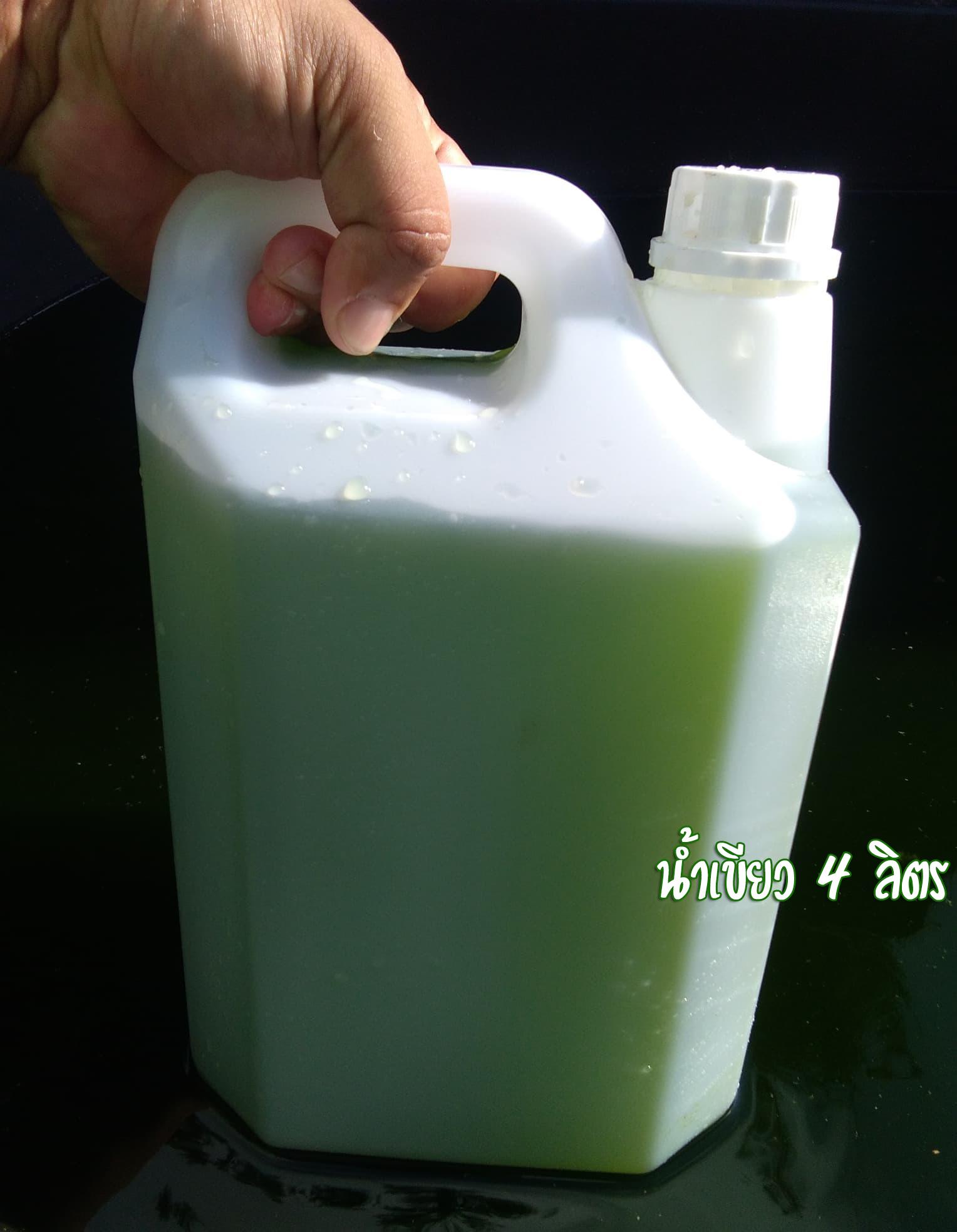 น้ำเขียว น้ำเขียวเพาะไรแดง คลอเรลล่า ขนาด 4 ลิตร (4000ML.)